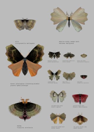 A Twitter Bot That Generates Beautiful, Imaginary Moths
